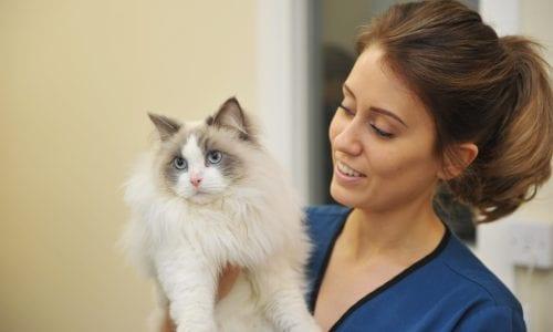 Nurse with cat