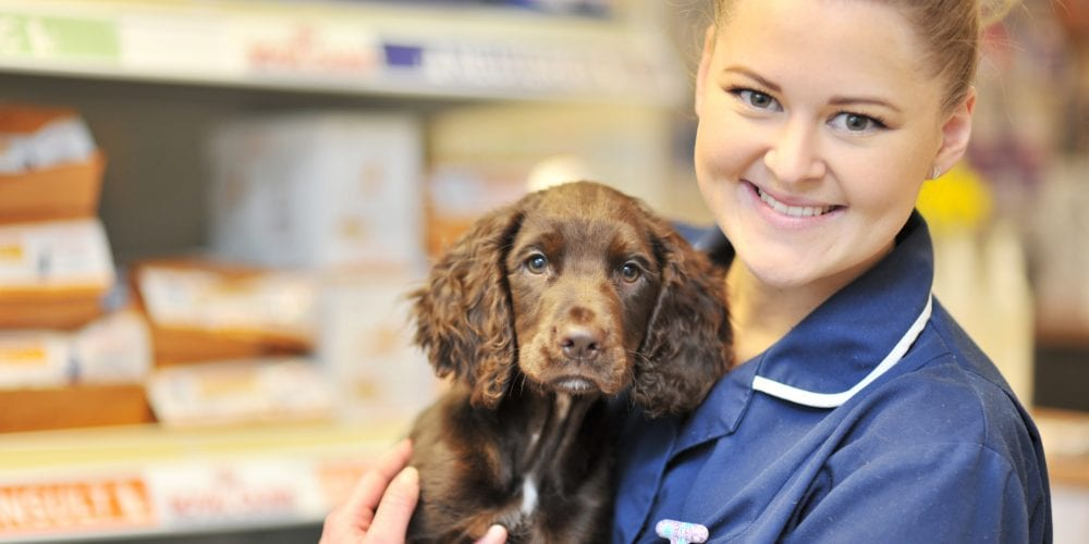 Trainee nurse with puppy