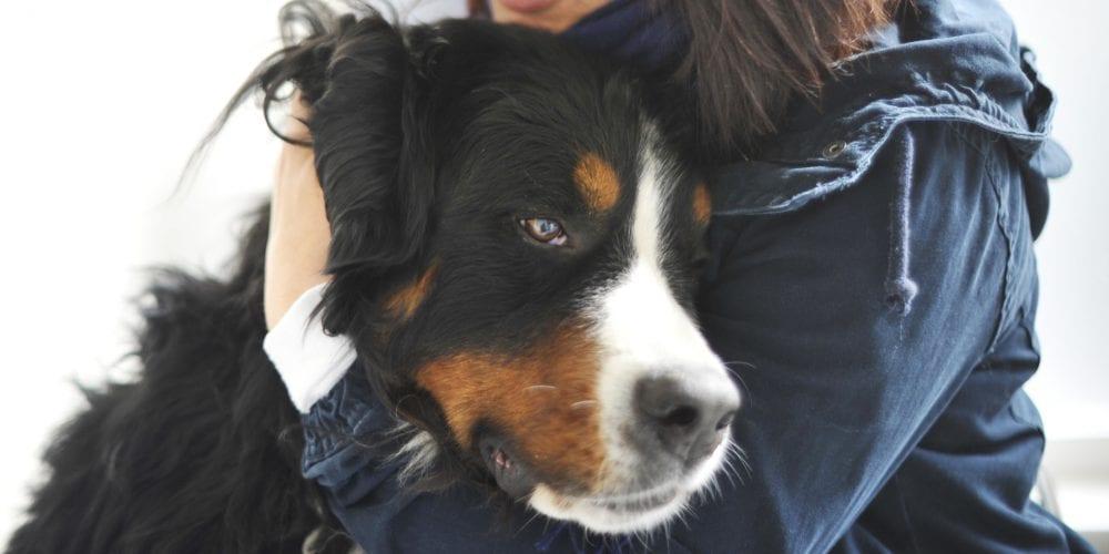owner cuddling dog 4