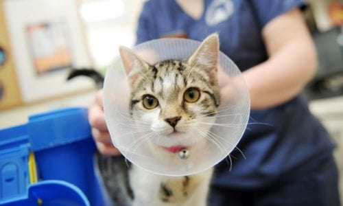 Cat wearing a buster collar