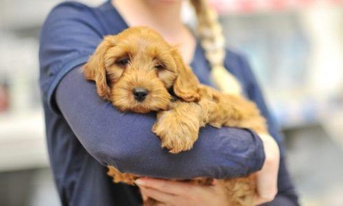 Nurse holding dog
