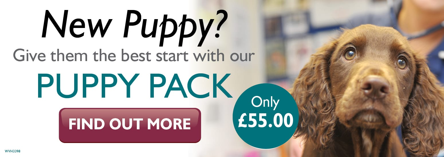 Puppy Pack covering puppy injections, flea & worm treatment and much more at vets in Birchwood