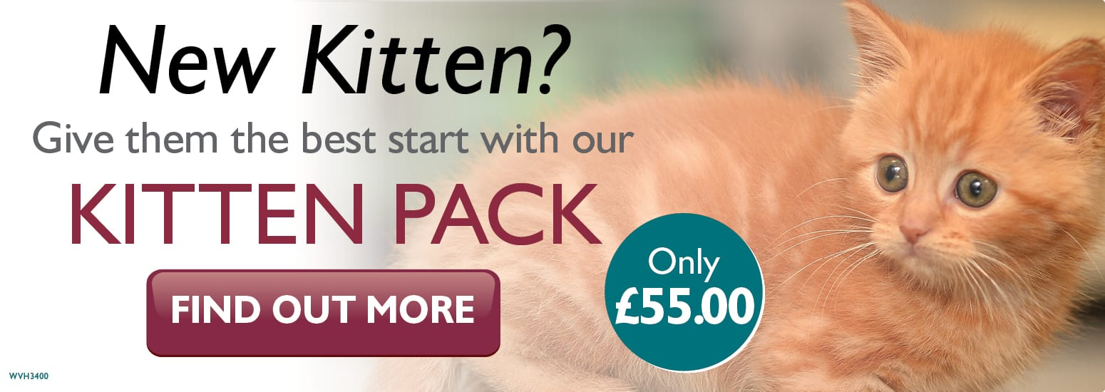Kitten Pack covering kitten injections, flea & worm treatment and much more